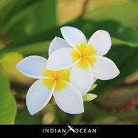 Mauritius IndianOcean